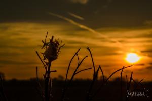 Sonnenuntergang Freienwill