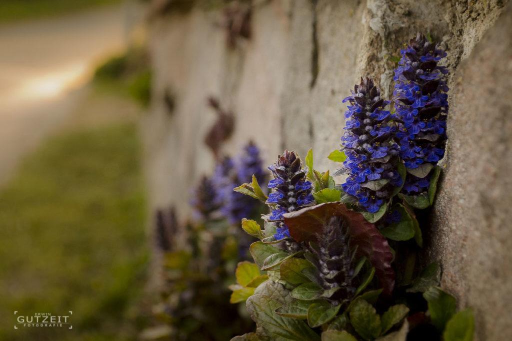 Blumen an der Mauer