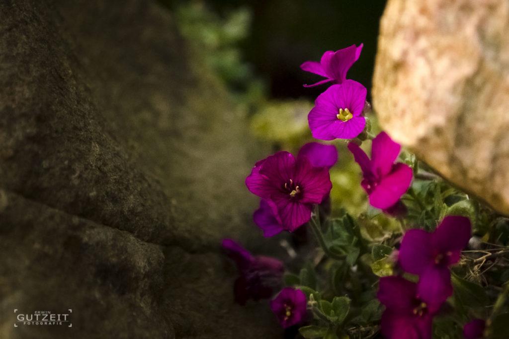 Blumen auf der Mauer
