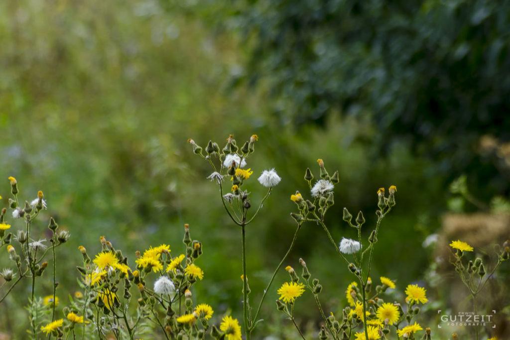 Blumenwiesenrand